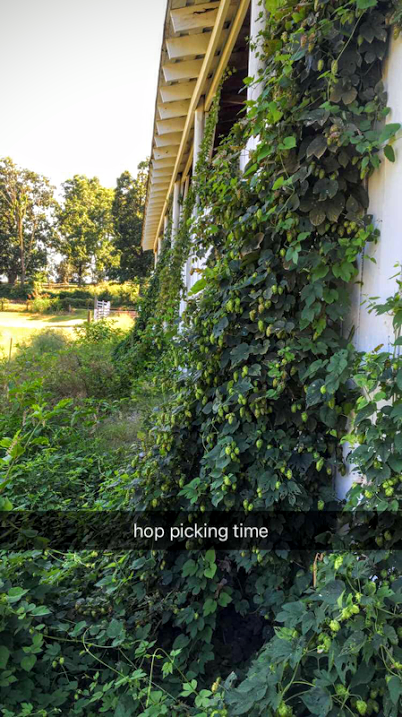 Luckily I was able to get some lines in the ground for hops. Otherwise the garden ran wild this year